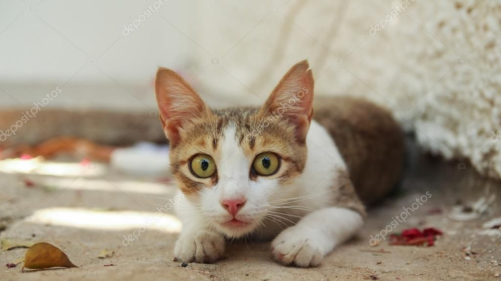 Funny domestic cat lies on the ground hunting victim with green eyes wide open — by vzmaze