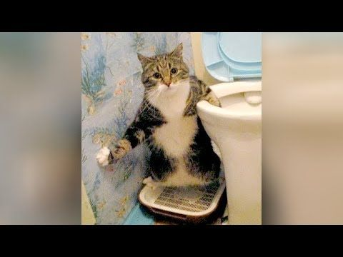 cat pilation funny