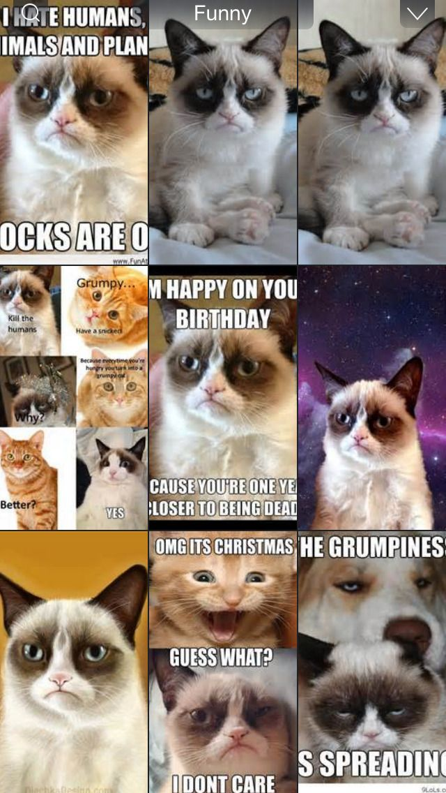 Grumpy Cat Meme Latest Fun ny Fat and Happy Cats mbs screenshot
