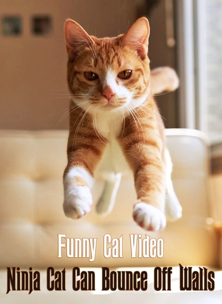 Funny Cat Video – Ninja Cat Can Bounce f Walls