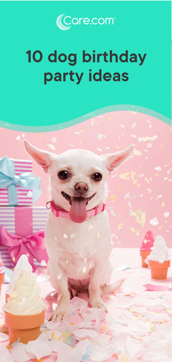 Grab Hold Of the Unbelievable Funny Cat Dog Happy Birthday Pictures