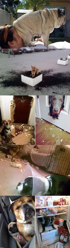 Everyone Blames Cats But Dogs Can Be Jerks Too
