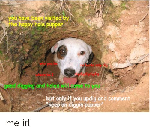 Holes Happy and Happiness ygu have been yisited by the happy hole pupper