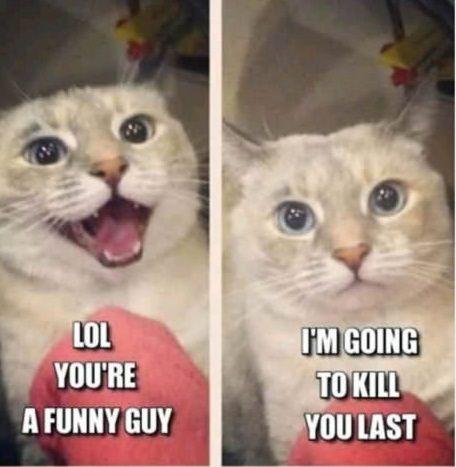 angry cat funny guy kill 1