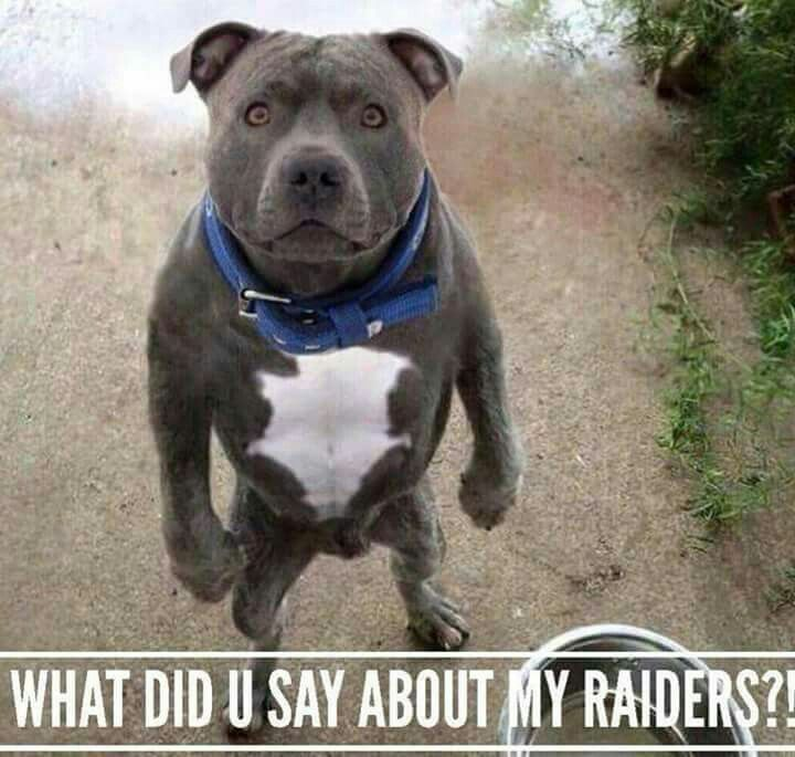 Pits Funny Dog Memes Funny Pets Funny Memes For Kids Funny Animal Memes