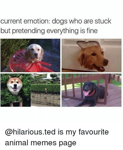 Dogs Memes and Ted current emotion dogs who are stuck but pretending