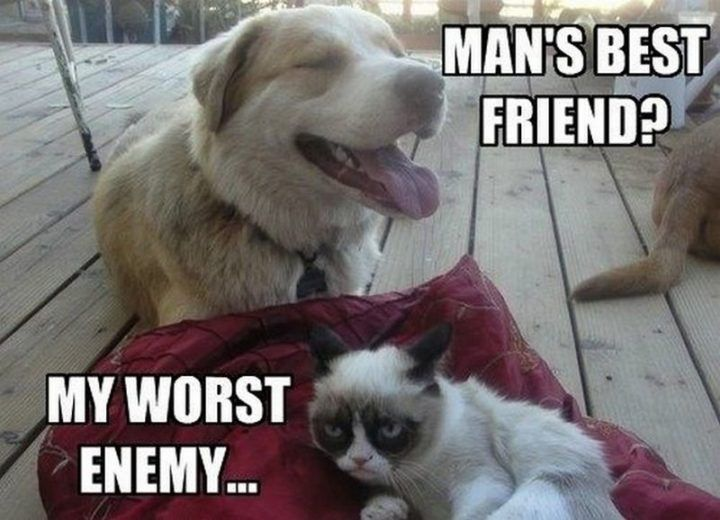 "55 Funny Cat Memes ""Man s best friend My worst enemy"