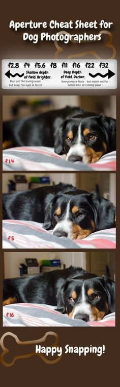 How to graph Dogs What Is Aperture and How Can It Improve Your Pet s