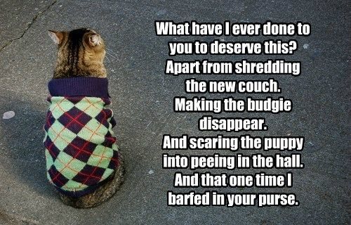 puppy sweater caption Cats funny