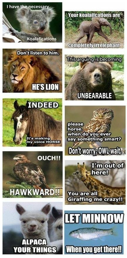 Keta Aaronn Animal Jokes Funny Animal Quotes