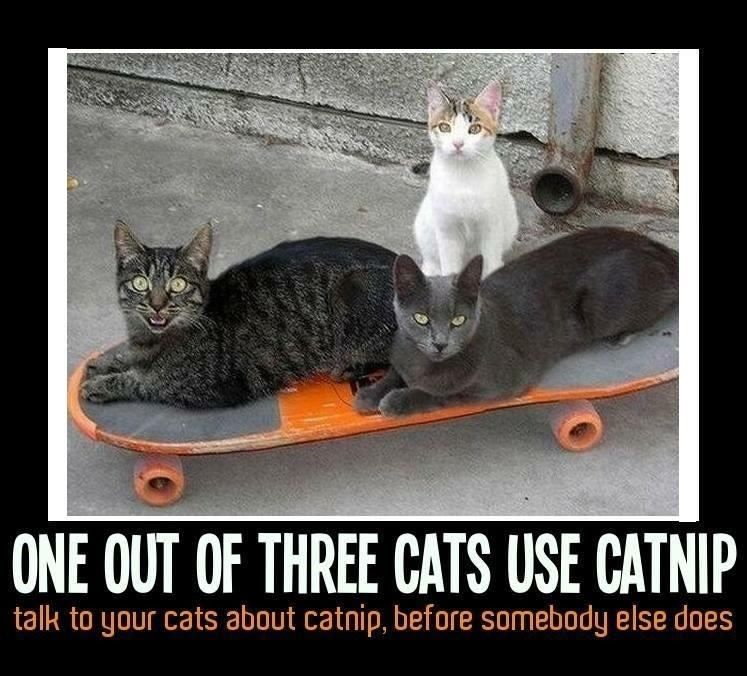 "FUNNY CAT MEME ""CATNIP"" FRIDGE MAGNET 5 X 3 5 funnymemes cats"