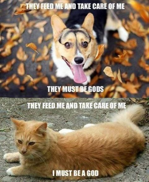 The difference between how dogs and cats think So true So True Funny