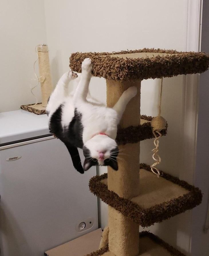 funny flexible cats