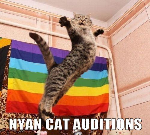cat nyan cat and funny image