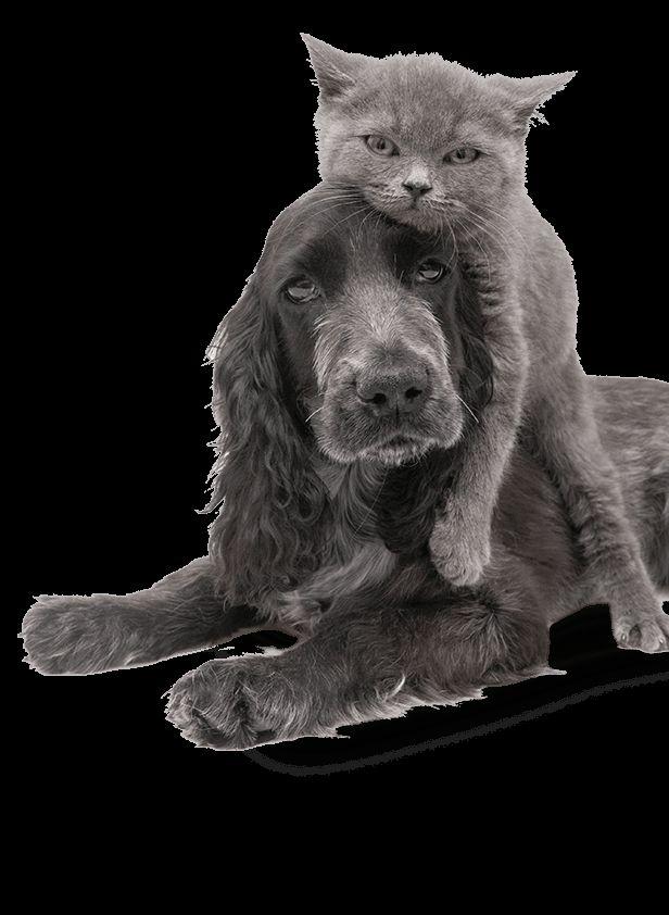 Safest Pet Food Possible