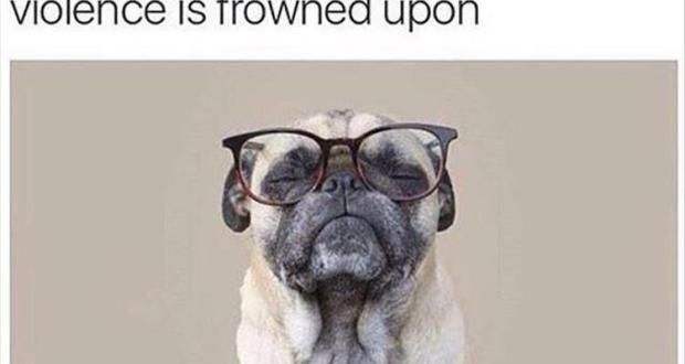 Grab the Best Of Funny Animal Memes for Office Work