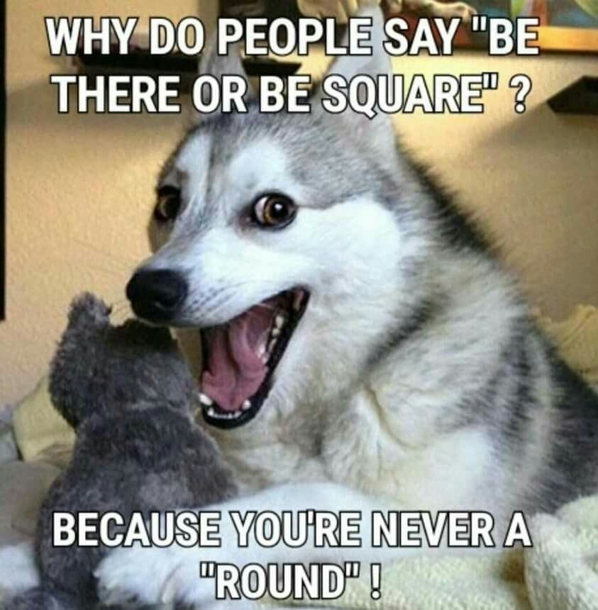 Pun Husky Husky Jokes Husky Humor Dog Jokes Dog Humor Funny