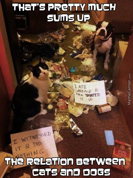 Dogs Are Messy cats Are Evilat s It