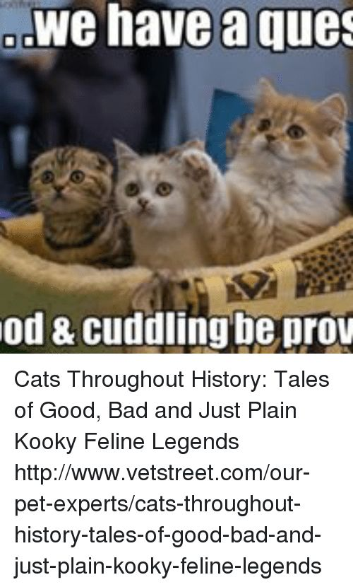 Bad Cats and Memes We have a ques od & Cuddling be prov