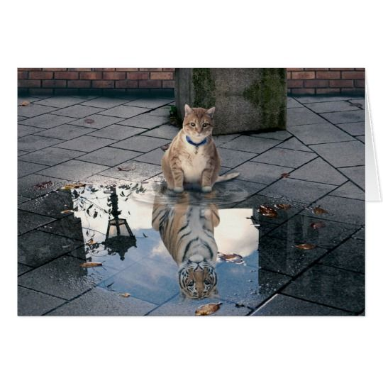 cat reflection fat cat cat memes cute cats r3b3c211e371c46ffb26fd0f7d58d8b20 xvuak 8byvr 540