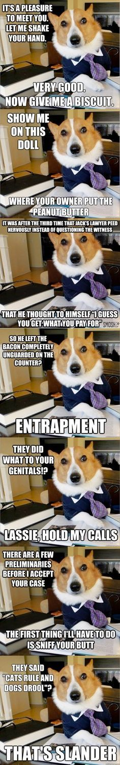 Lawyer dog meme mini p