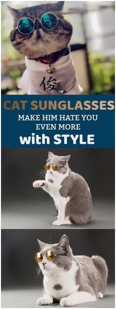 Cat Stroller Cat Sunglasses Cat Info Cat Boarding Crazy