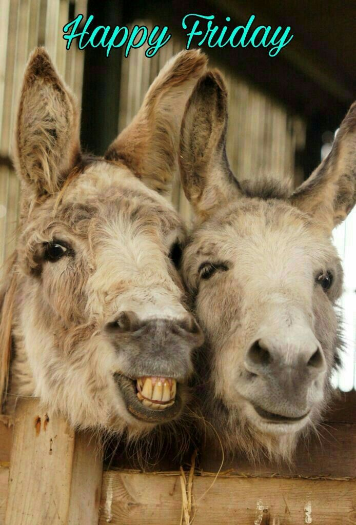 Happy Friday Cute Animal Beautiful Creatures Animals Beautiful Donkey Funny Cute