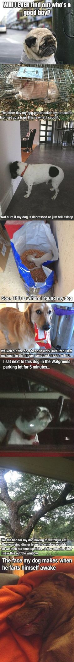 visit for the best funny dog joke pics inspirational dog