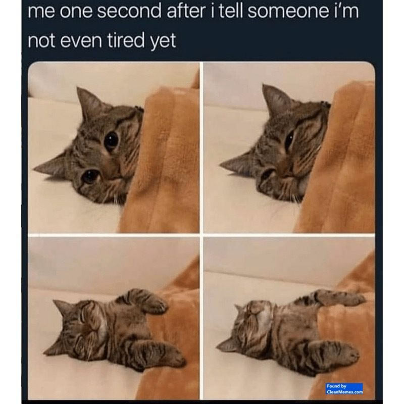 Author cleanmemesPosted on January 28 2019 January 16 2019 Categories Cat Memes Clean Funny Clean MemesTags Cat Memes Clean Funny