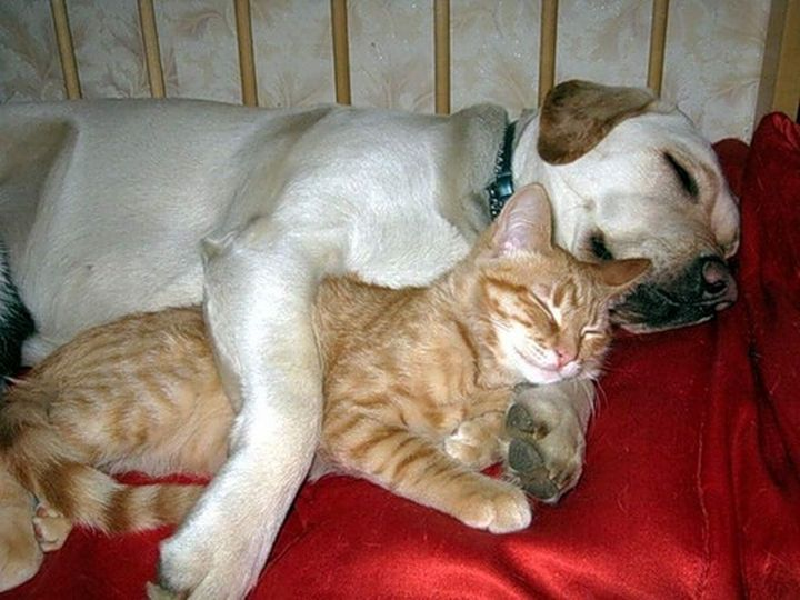 23 Dogs and Cats Sleeping To her Snuggle bud s