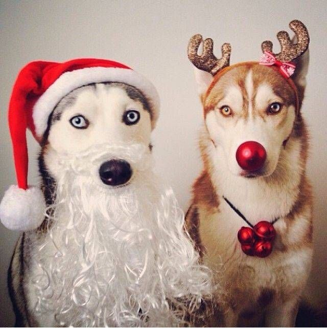Funny Dog Christmas Cards 103 Best Puppies Pinterest Inspiration Dog Christmas Card Sayings 2460