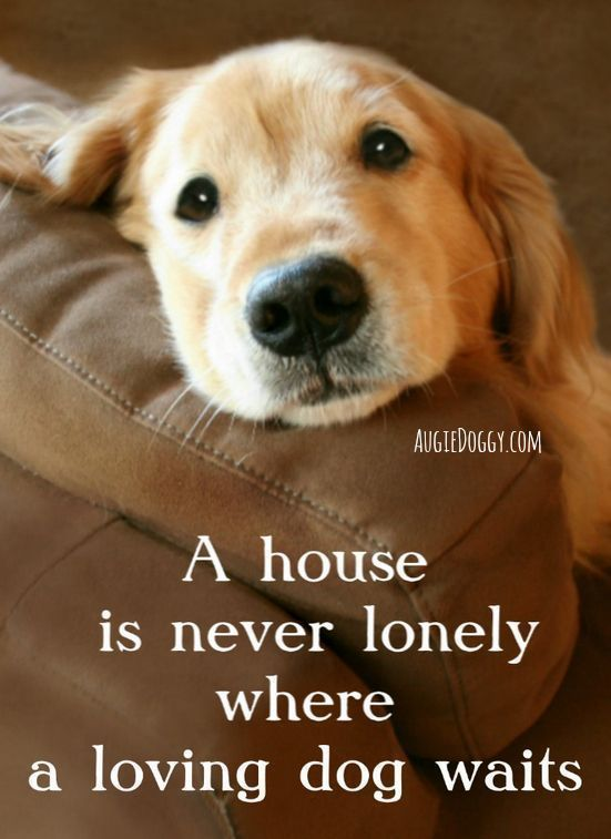 A house is never lonely where a loving dog waits quote