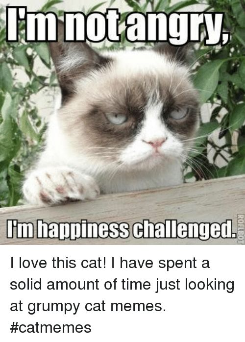 Love Memes and Grumpy Cat m happiness challenged I love this cat
