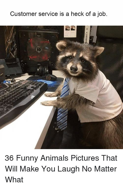 Animals Funny and Funny Animals Customer service is a heck of a job