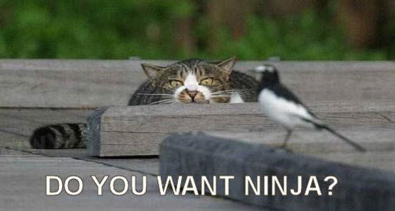 do you want ninja