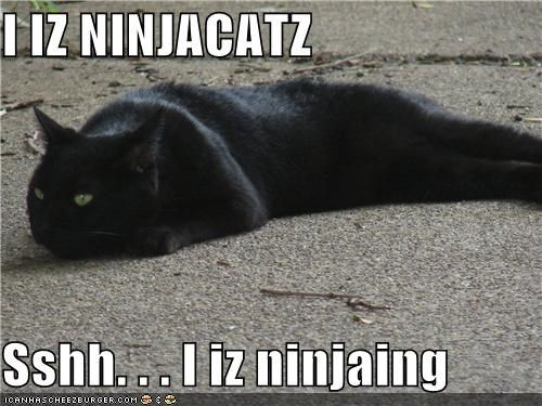 best of the week caption captioned cat Hall of Fame ninja ninja cat ninjaing noun shh