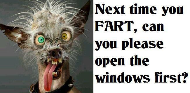 Cat fart funny memes funnypictures hilarious cat fart funny memes funnypictures hilarious 651x320 Www fart