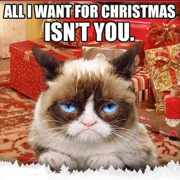 Funny Grumpy Cat Christmas Memes.Get The Incredible Funny Grumpy Cat Memes Christmas