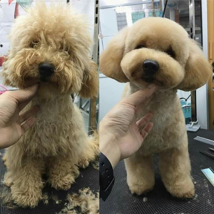 repinned Before & after dog grooming