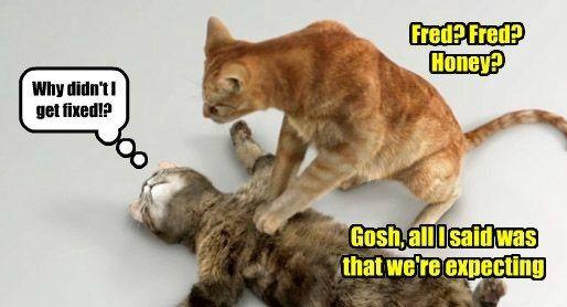 caption Cats funny momcat litter