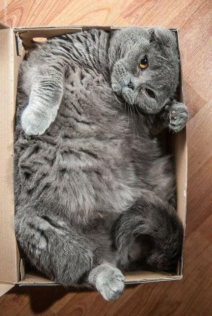 cat most fat big eno