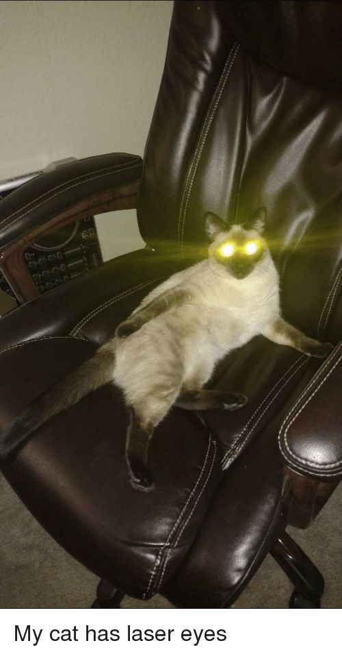 Cat Laser and Eyes