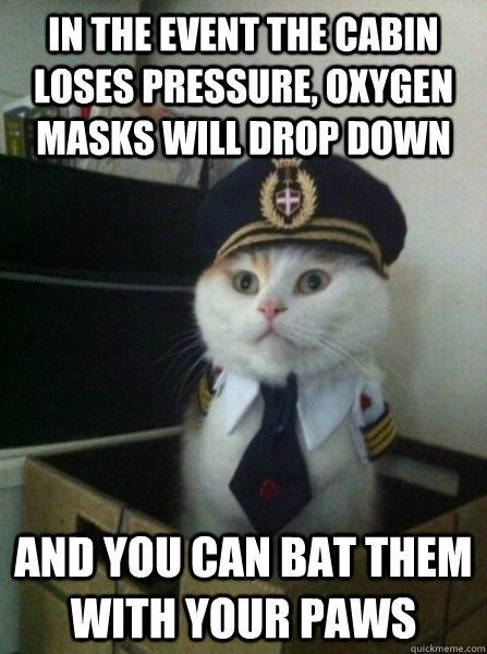 in the event the cabin loses pressure oxygen masks will dro Captain kitteh Humor Animal