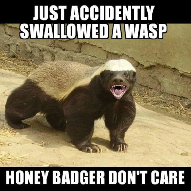 honey badger meme f5f9b df3d39b