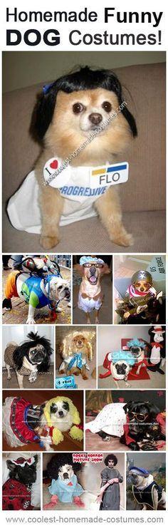 11 Funny Dog Costumes Anyone Can Make at Home