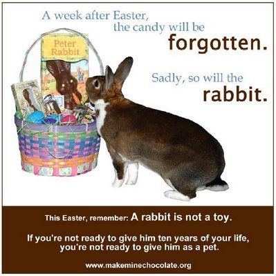 Easter is ing up if you are going to a member of your family a bunny make it a chocolate one A pet rabbit is not a toy