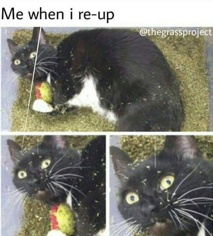funny memes weed stoners stoned kush high high af high times weed blog cats