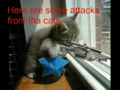 Ninja Cat s Attack Dogs Verus Cats 1 Funny