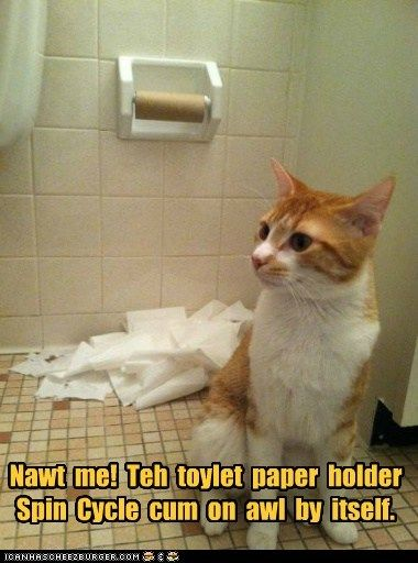 roll captions toilet paper destroy bathroom toilet spin mess Cats TP