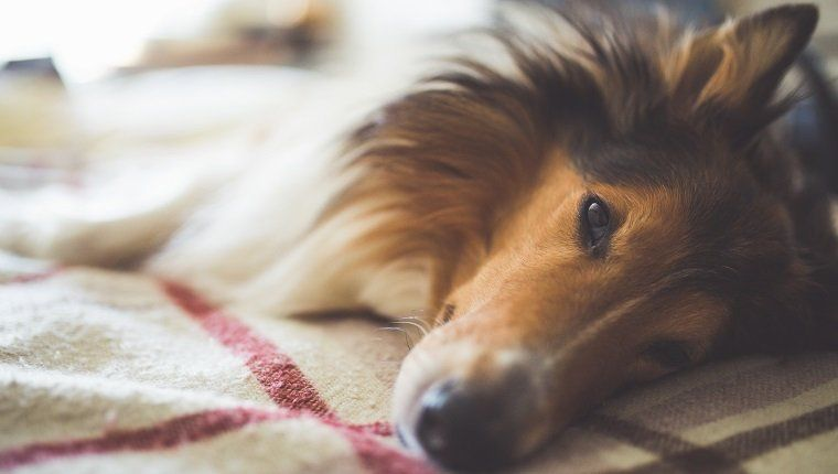 Risks And Side Effects Metronidazole For Dogs